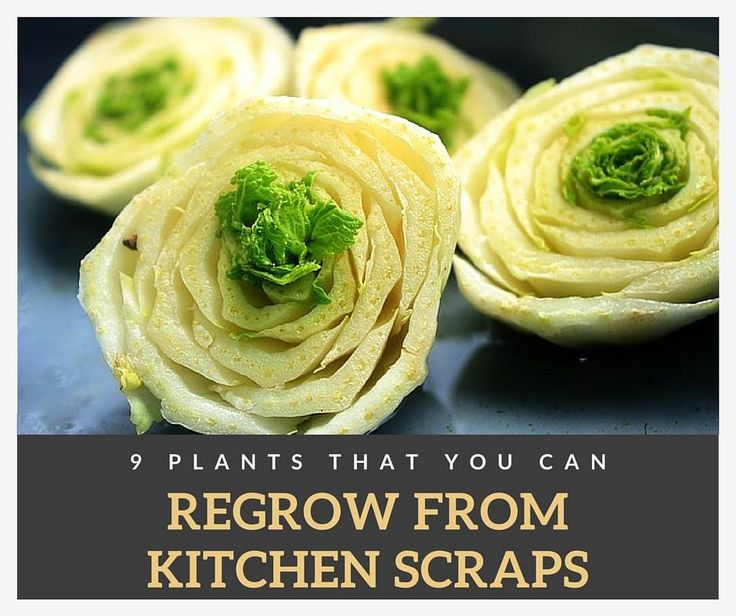 16 Kitchen Scraps That You Can Re Grow: 17 Best Images About Gardening Tips And Ideas On Pinterest