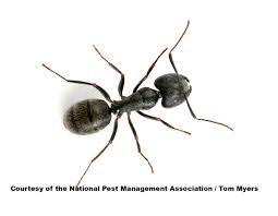 """Képtalálat a következőre: """"ant"""""""