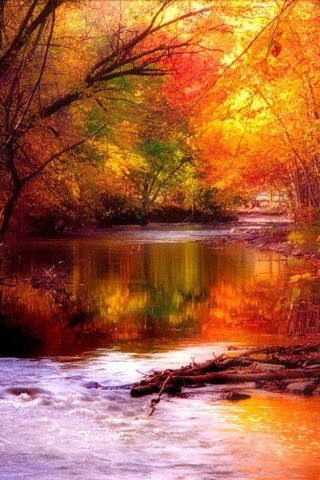 A river in the middle of a forest with trees in fall colors. This place looks likes a nice place to spend a afternoon fishing in God's beauty. Nature lovers of the world would like to spend time here.