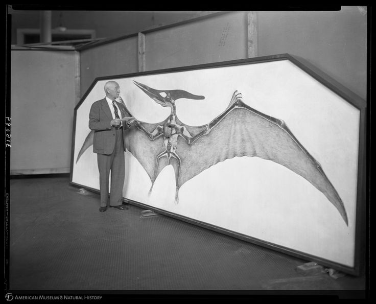 Dr. Barnum Brown with mounted Pteranodon, American Museum of Natural History, New York, 1938