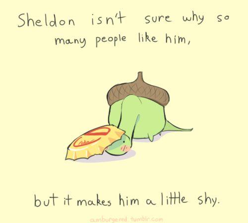 Sheldon the turtle is a little shy ...