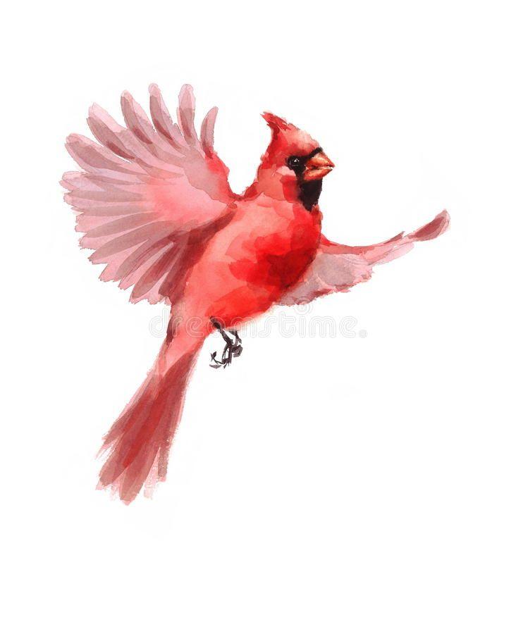 Northern Cardinal Bird Flying Watercolor Winter Illustration Hand Drawn Royalty Free Illustration Watercolor Bird Cardinal Birds Cardinal Tattoos