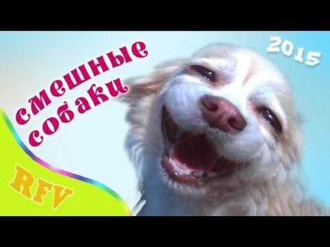 Самые смешные собаки #1 ∙ Приколы с животными 2015 ∙ Best Cute Dogs Compilation · Part 1