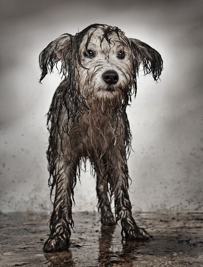 The yard is a little muddy... Mud mutt by Ida Kucera aka Herdnerd. °
