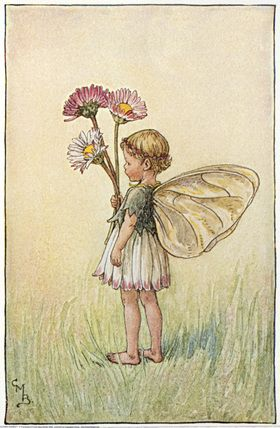 Illustration for the Daisy Fairy from Flower Fairies of the Spring.  A small girl fairy stands facing left with a bunch of daisies in her right hand.    Author / Illustrator  Cicely Mary Barker