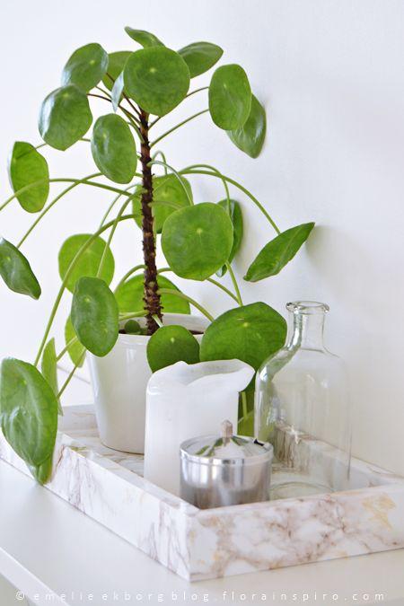 1 Plant - 3 Stylings, urban jungle bloggers: Pilea