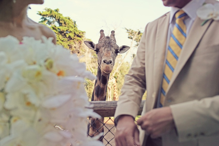 Max WangerPhotos Bombs, Bronx Zoos Wedding, Max Wanger, Wedding Day, Wedding Dreams, Best Wedding Photos, Wedding Pictures, Adorable Things, Adorable Animal