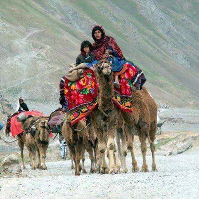 Kuchi, Nomadic Pashtun Tribes, Afghanistan