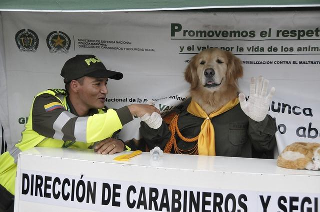 Nos sentimos muy afortunados de contar con animales tan especiales en nuestras filas como Doggi que nos ayuda a enseñarle a las nuevas generaciones sobre diferentes temas importantes.