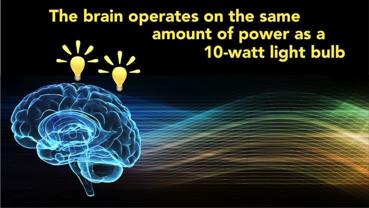 Can your brain produce electricity? Our Did You Know series is not a quiz, or a test, it is just a fun fact of the day spruced up with high quality graphics http://www.scientificanimations.com/did_you_know/can-brain-produce-electricity/ #ScientificAnimations #DidYouKnow #ThursdayDidYouKnow #Brain #LightBulb