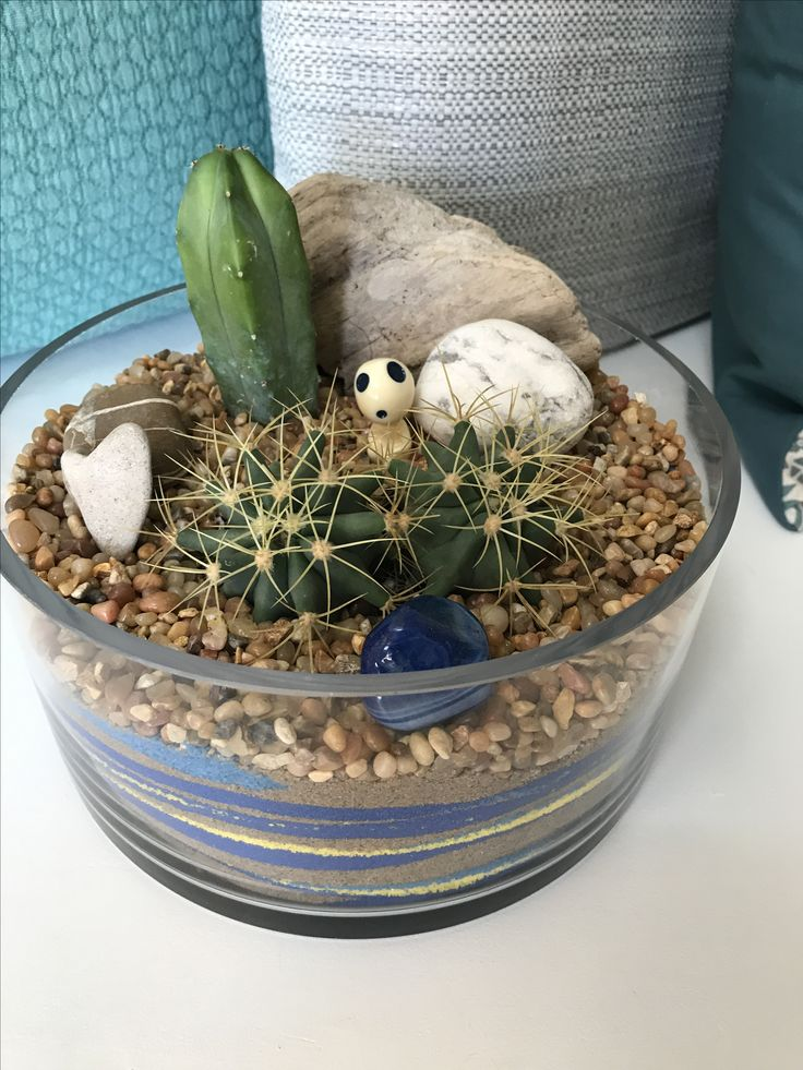 @misscellaneous.ca Cactus Terrariums