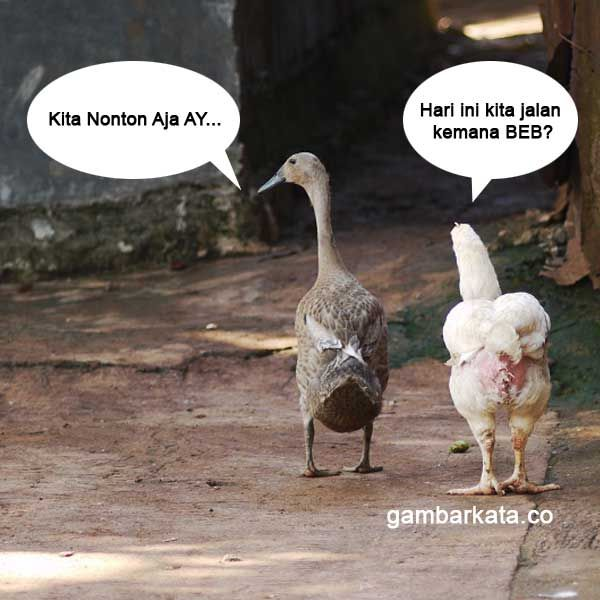 Bebek Vs Ayam Kata Kata Pinterest Humor Funny Pictures And Funny