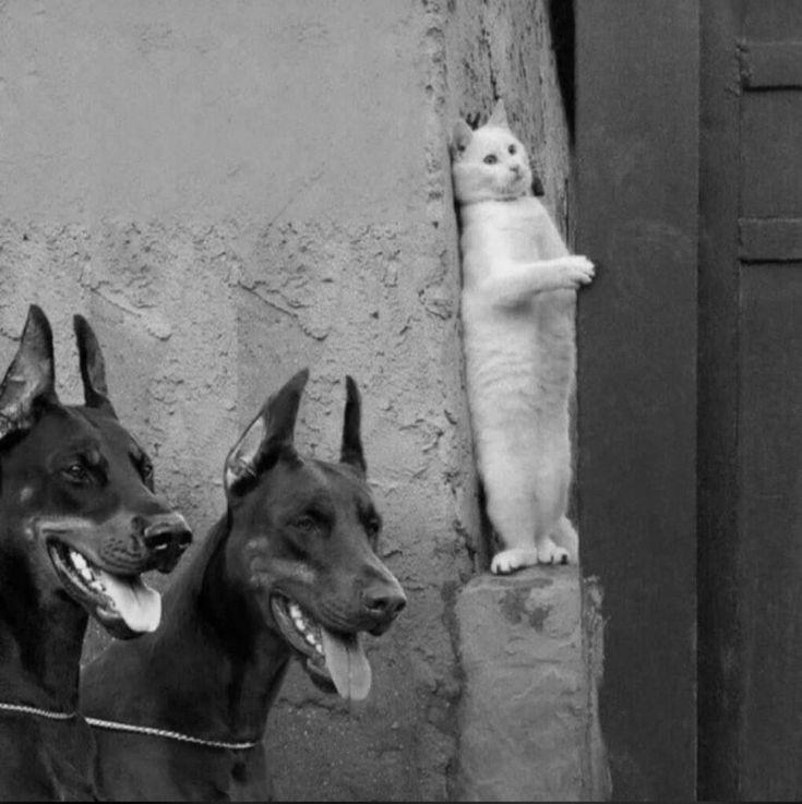 Картинка кот прячется от двух собак
