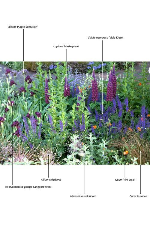Dwarf cultivars & shorter Plant combinations for cold hardy gardens from a Netherlands site, Almost all are grown in the US as well.  Use the Latin names & look them up.