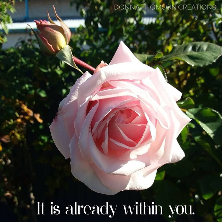 It is already within you! The only difference between the rose bud and the full bloom is time. There's nothing you need to do but allow your true radiance to bloom in its own perfect timing. All is well.