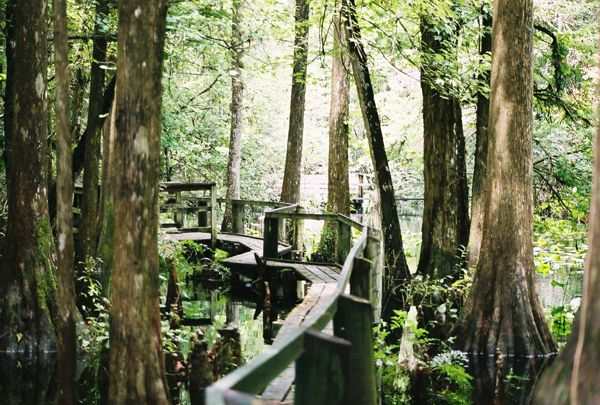 As one of Florida's first parks, Highlands Hammock State Park in Sebring, FL. is rich in both history and natural beauty.