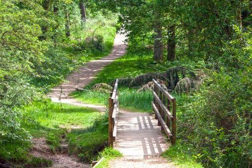 Landscape Nature Forest Path Pathway Grass Dragos Woodland Garden Pathways Country Roads