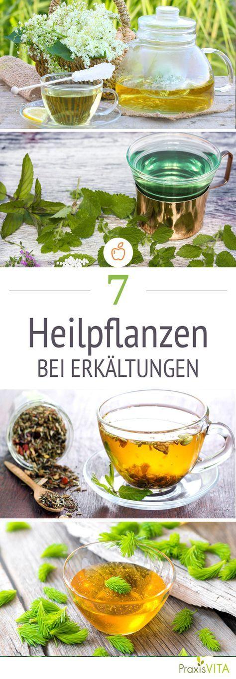 Die besten Heilmittel gegen Erkältungsbeschwerden sind oft in unserem Garten zu finden: Kamille, Holunder und Co. helfen gegen laufende Nasen und trockenen Husten.