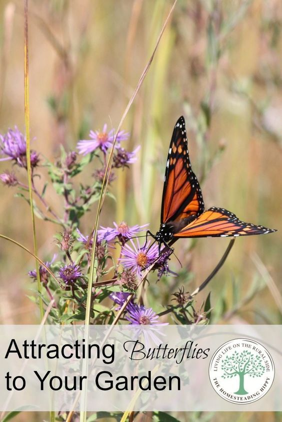 Attract Some Butterflies To Your Garden With These Pretty Flowers! Easy To  Grow And Low