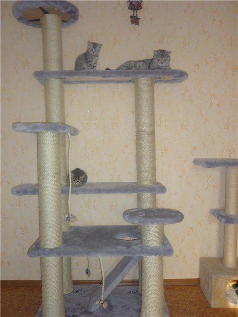 """Высота """"изделия""""-2 метра. Для строительства потребовалось: -250 метров сезалевой веревки (8 мм) -3,5 метра искусственного меха -мебельные щиты (нашлись в хозяйстве) -картонные трубы -уголки,шурупы,мебельный степлер http://mauforum.ru/viewtopic.php?f=40&t=114&start=580&view=print"""