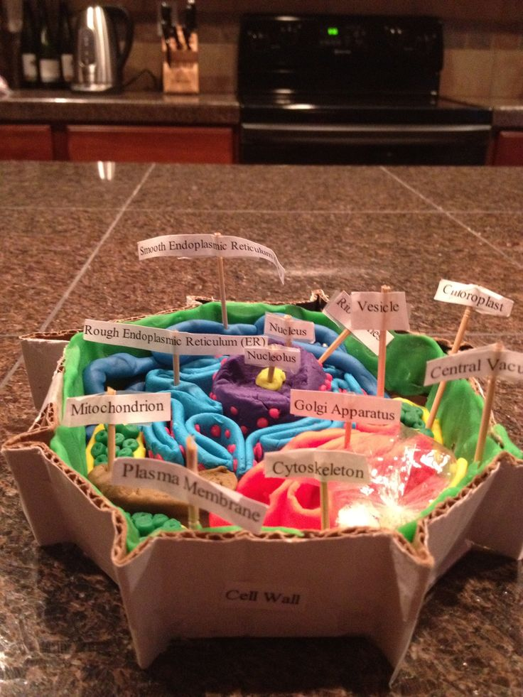 "YES!!! ""love the cell wall idea""....Science project..plant cell"