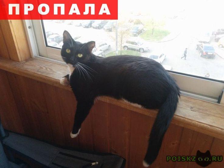 Пропала кошка черная с белыми лапками, зеленогра г.Зеленоград http://poiskzoo.ru/board/read24880.html  POISKZOO.RU/24880 Зеленоград, .., у магазина АТАК .. июня в .. пропала кошка, выпала из окна. Кошка напугана, могла забиться под машины, в подвалы, подъезды. Кличка: Луна. Черная с белым. Приметы: передние лапки - белые носочки, на задних лапах - чулочки разной длины. .., .. года, .., .. кг. Стерилизованы, привита. Если увидите - просьба звонить по телефонам: ... (Анастасия), ... (Кирилл)…