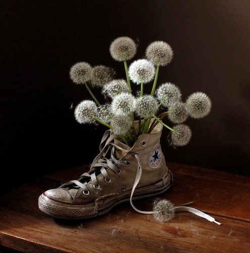 Dandelions love
