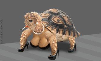 Ooooooooops !!!!   Kinda scarry  huh ?!?!?  That turtle has places to go and people to see !!!' Lol lol lol  ; )  Ohhhhh myyyyy !