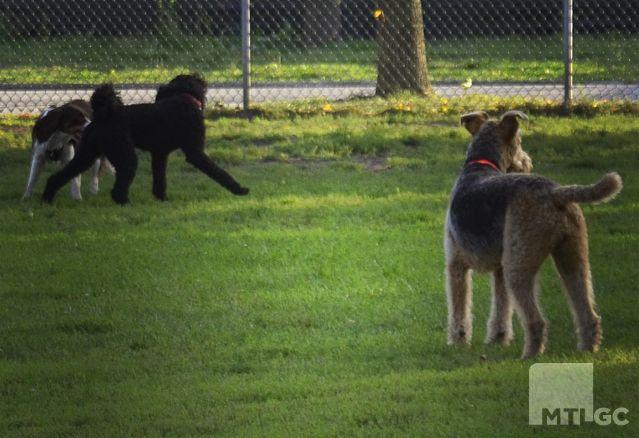 Griffintown-parc-a-chien