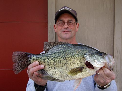 212 best images about my fishing hole on pinterest for Crappie ice fishing