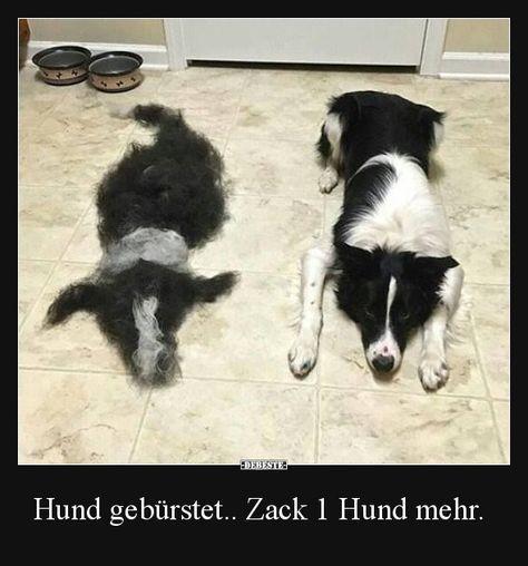 Hund gebürstet.. Zack 1 Hund mehr. | Lustige Bilder, Sprüche, Witze, echt lustig