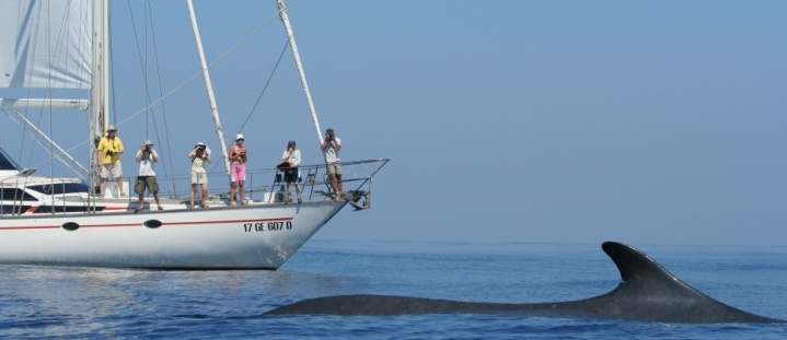 Whale and Dolphin research in Italy