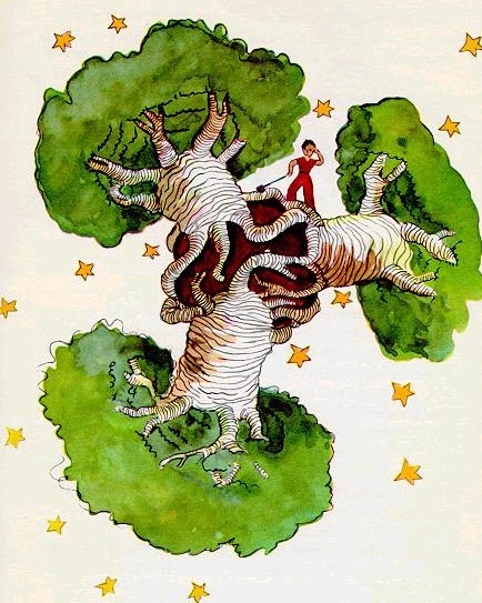 Little Prince baobabs.