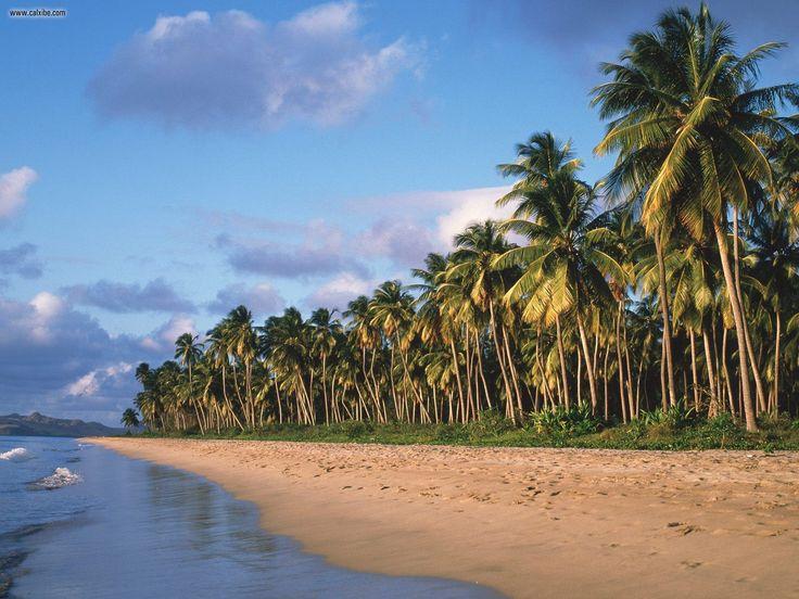 Nature: Pinneys Beach Nevis West Indies