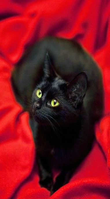 black beauty<3                                                                                                                                                                                 Mais