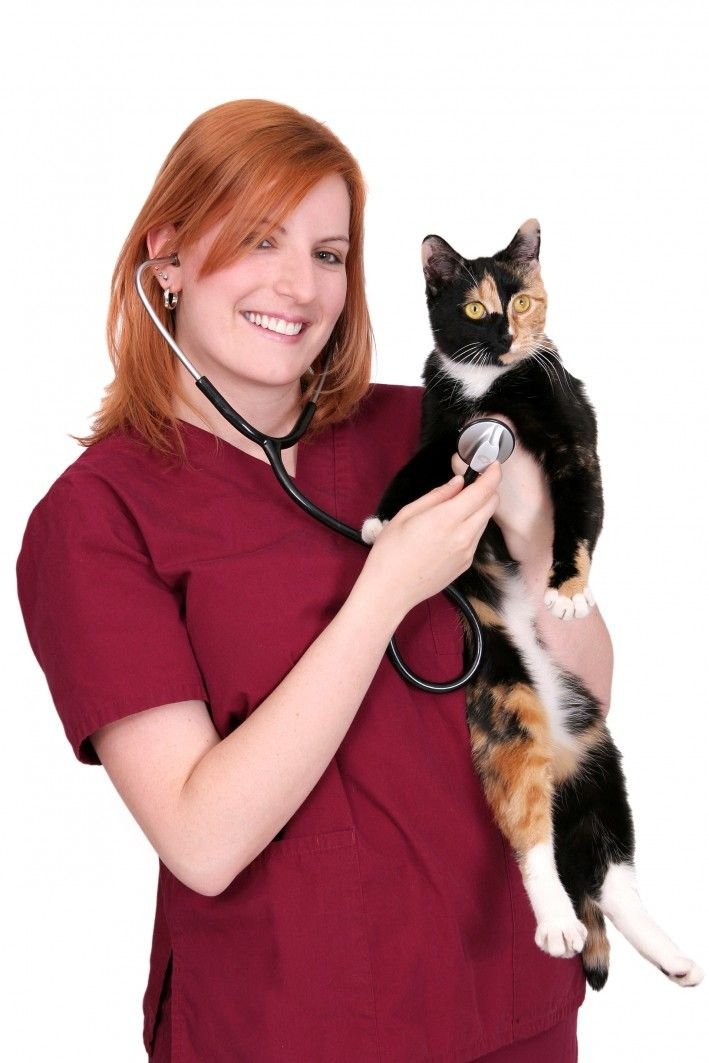 http://www.vettechu.com/category/pennsylvania/  Vet Tech Schools in PA can offer a degree in the science of veterinary technology.