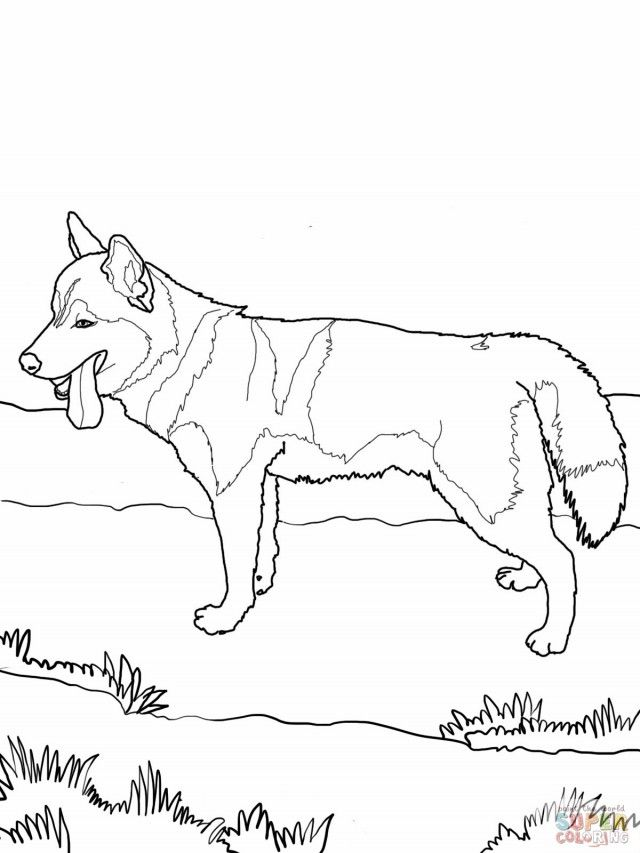 siberian husky coloring page hd wallpaper id 58737 uncategorized - Husky Coloring Pages