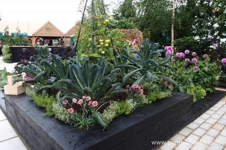 The centrepiece of the raised bed is a tomato grown with a wigwam support, which is surrounded by the beautiful Cavolo Nero Kale, which is edged with Thyme and Dianthus.