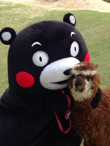 Kumamon is that a llama?!?
