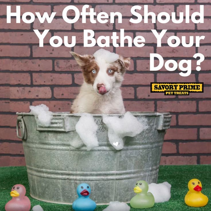 How Often Should You Bathe Your Dog Bathing A Puppy Your Dog Pets
