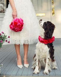for brides with pets. Lovely idea. How are we going to get a garland of flowers around Max's neck is another matter.