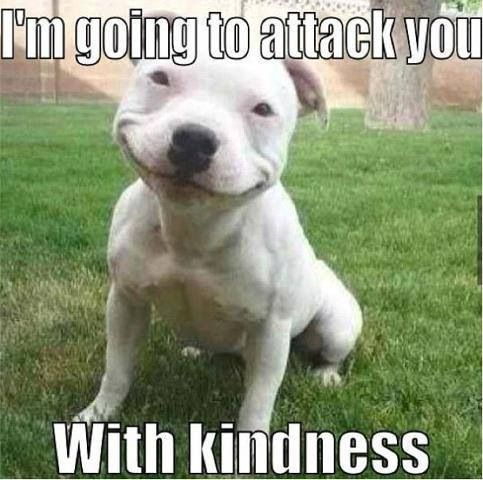 pitbull mems | Pitbull attacks with kindness..memes