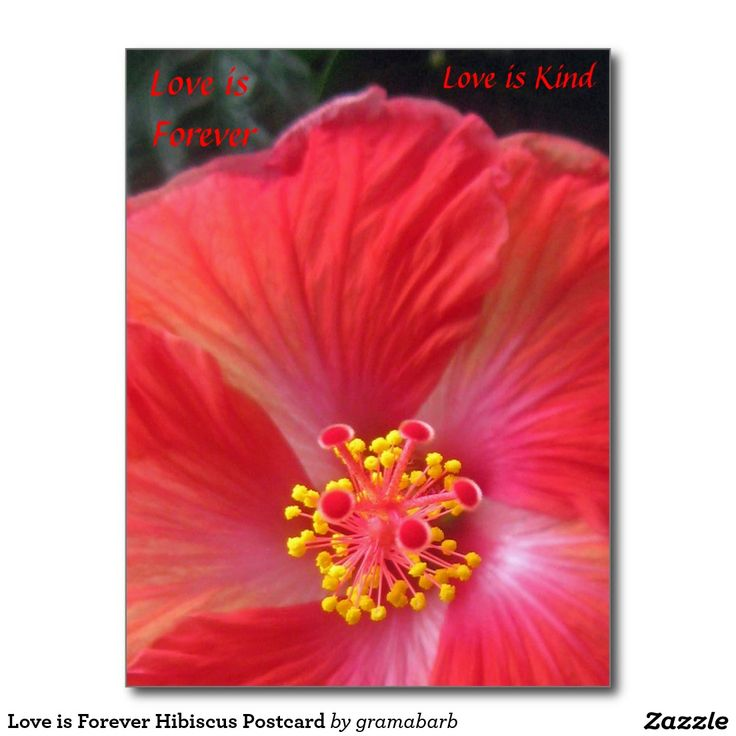 Love is Forever Hibiscus Postcard