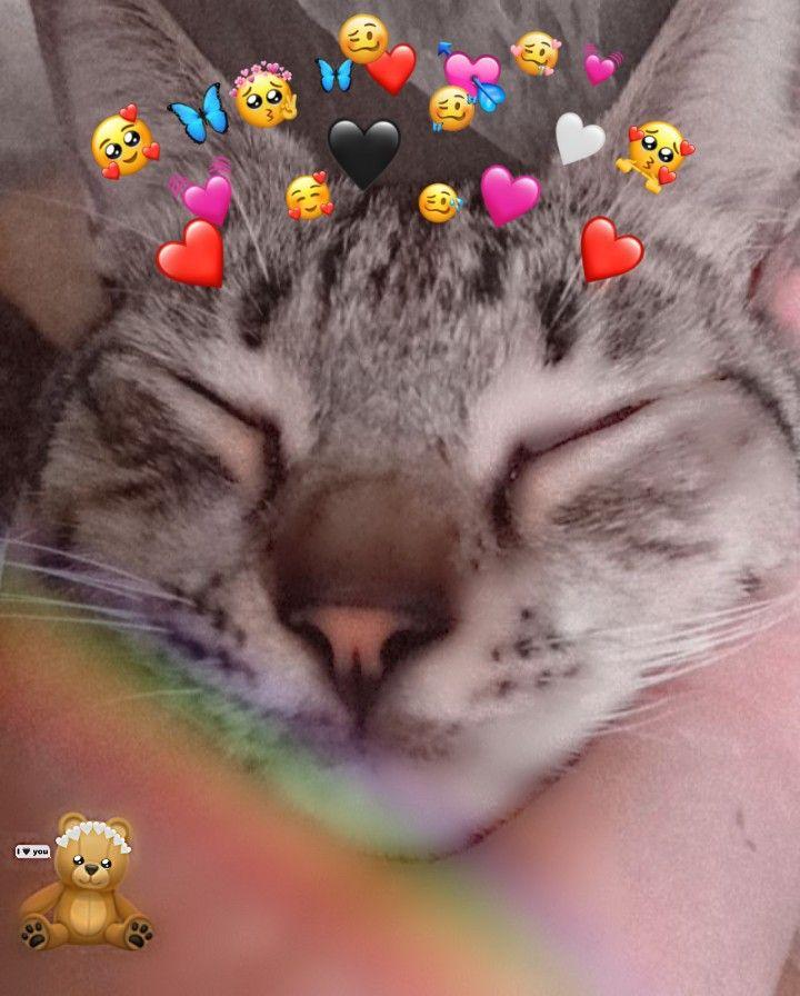 Kucing Lucu Kucing Imut Kucing Kucing Lucu Anak Kucing Lucu