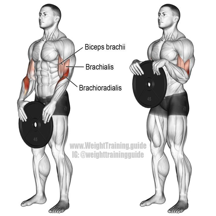 Weight plate reverse curl. Main muscles worked: Brachioradialis, Biceps Brachii, and Brachialis. Also known as a weight plate overhand curl. http://amzn.to/2rsrXXL