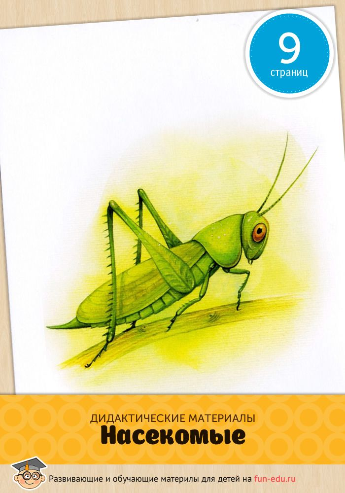 Отличные обучающие карточки с насекомыми подойдут для занятий с детьми дома, в детском саду и школе. Картинки расширят знание детей о мире.