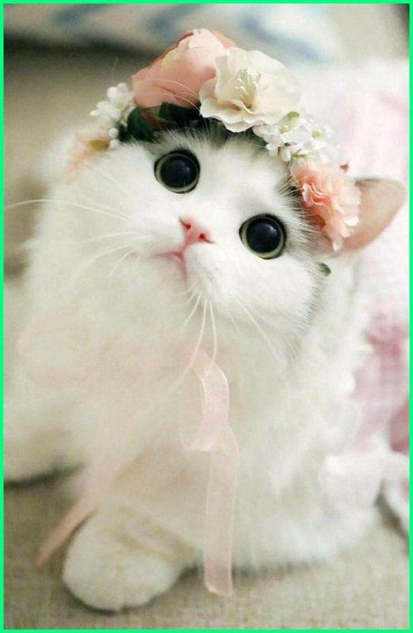 Nama Kucing Betina Yang Bagus Lucu Dan Keren Dengan Gambar