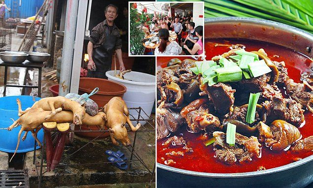 Inside China's Yulin No.1 Crispy Dog Meat Restaurant http://www.dailymail.co.uk/news/article-4566872/Inside-China-s-Yulin-No-1-Crispy-Dog-Meat-Restaurant.html#v-1546439842416212500
