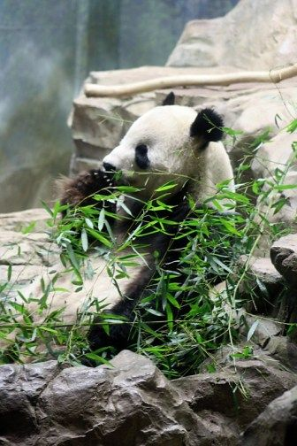 Tips on visiting the National #Zoo, Washington, DC
