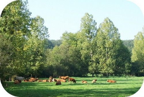 Bocage and hedgerows in France - Pôle bocage et faune sauvage